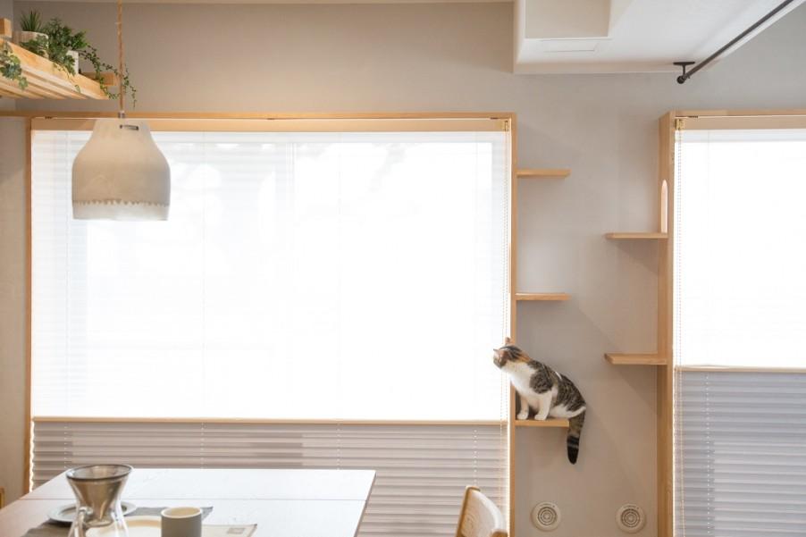 猫も人も快適に共存できる住まい