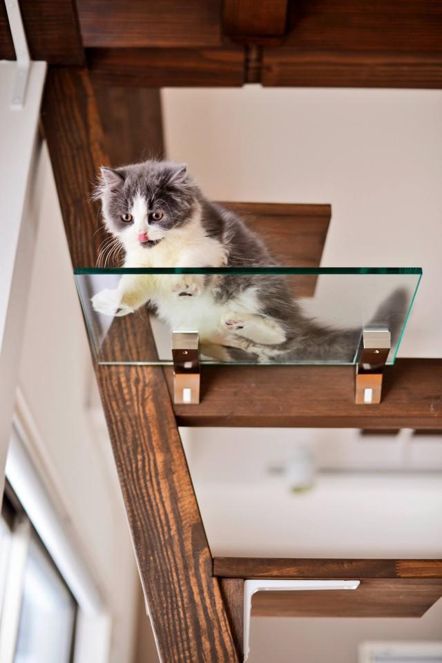 階段は踏板の一部をアクリル板にすることで、肉球を眺められるという猫好きにはたまらない仕掛け