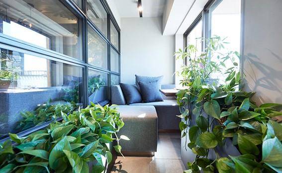 室内窓越しに眺めるグリーン